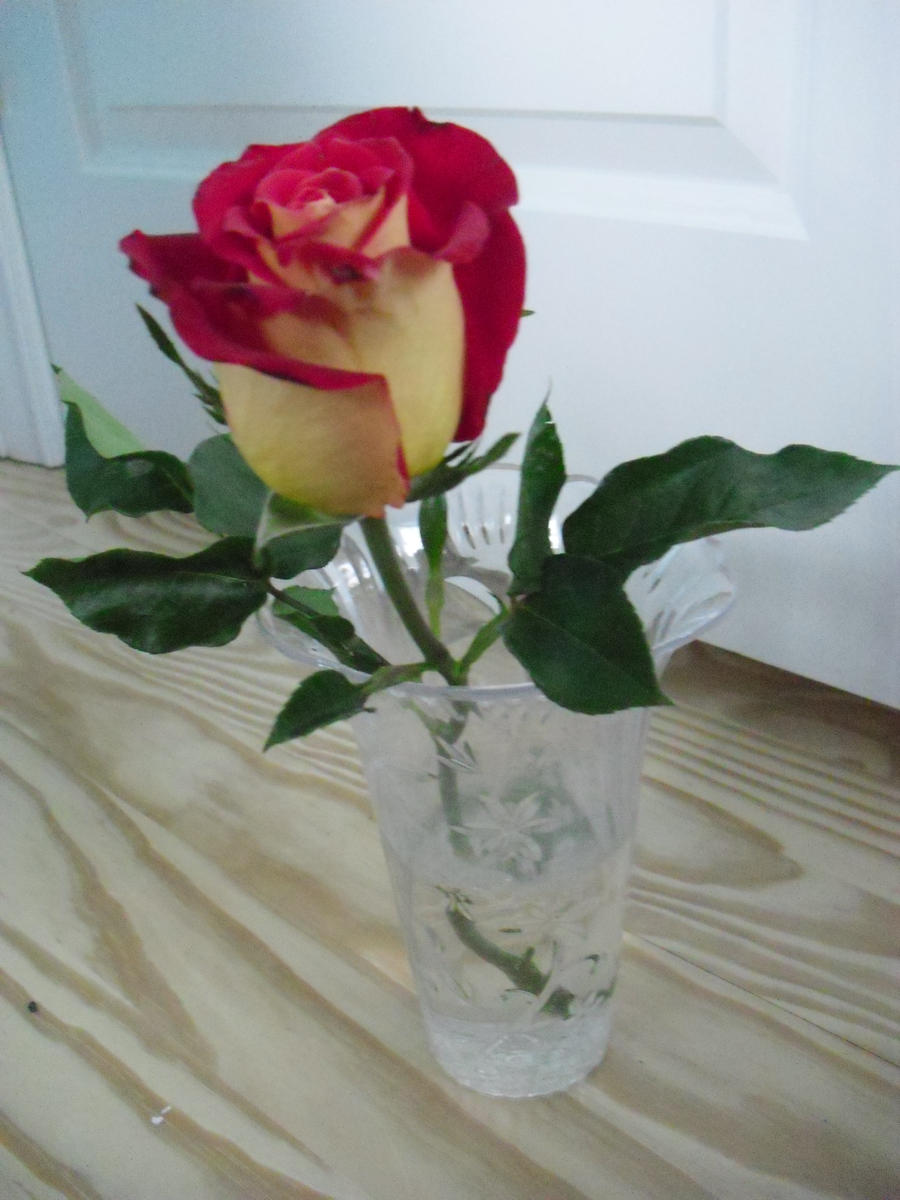 CVECE A_rose__s_beauty_by_momo_akiyama-d3ab8f1