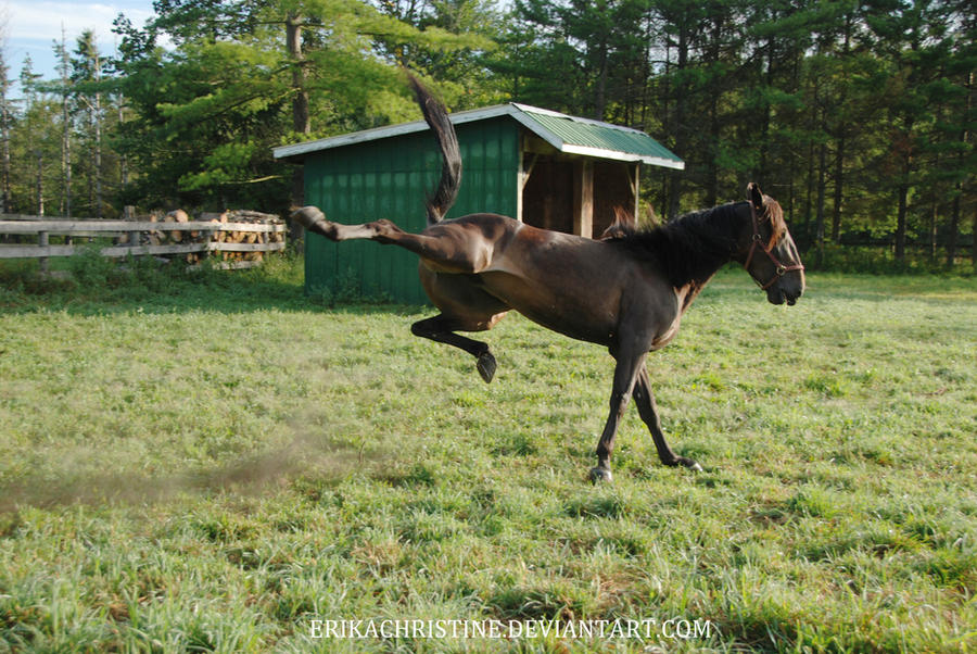 Moose 5 by ErikaChristine