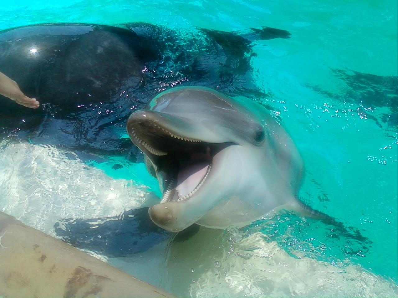Happy dolphin say ahh