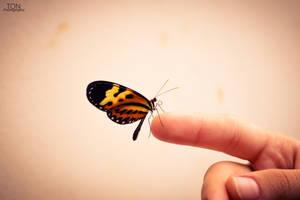 butterfly by Tadakatsukaw