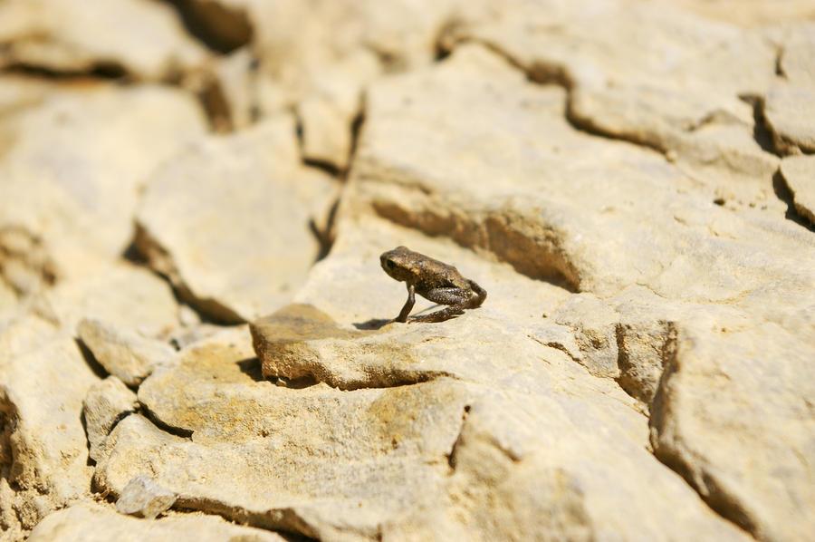frog by naSalkica