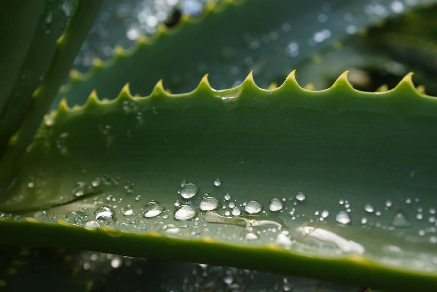 Wet Cactus by Moseley92