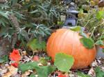 Halloween Stock 13