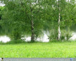D_stockC3026_birches by DimagerStock