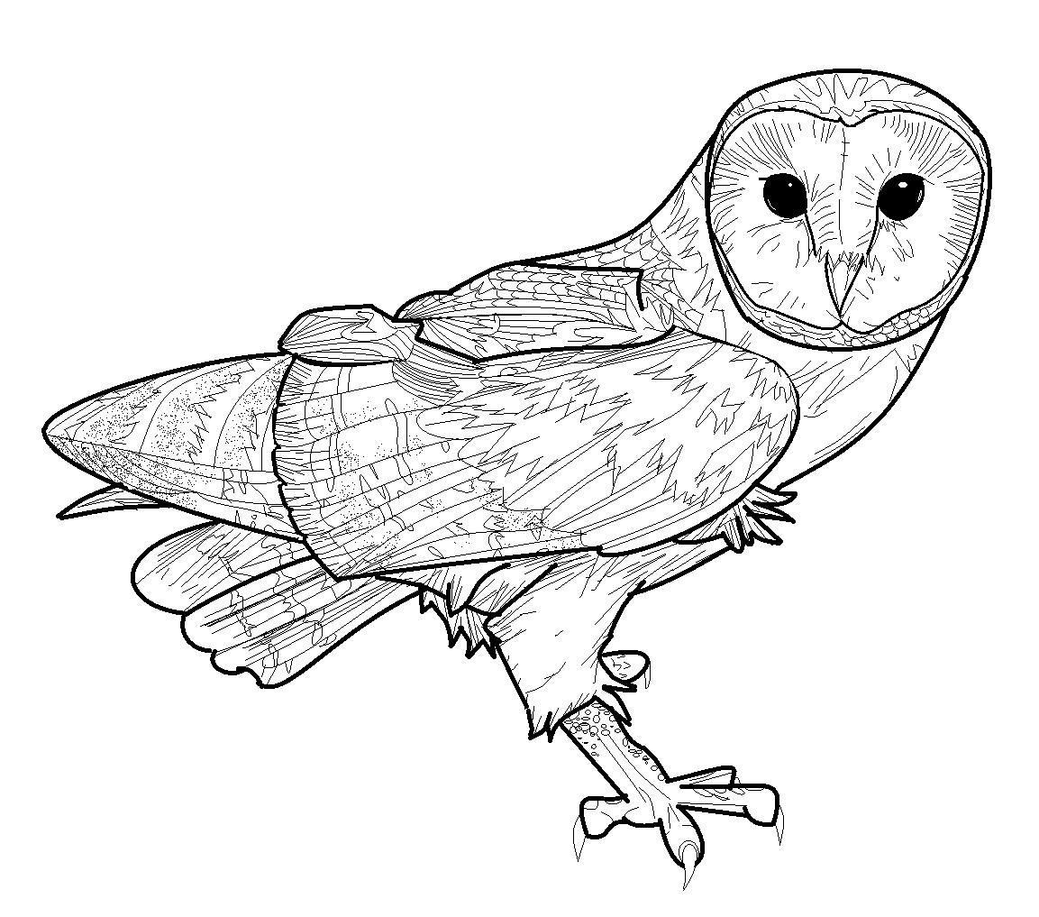 Putty Line Drawing Q : Barn owl lineart by conkertsquirrel on deviantart