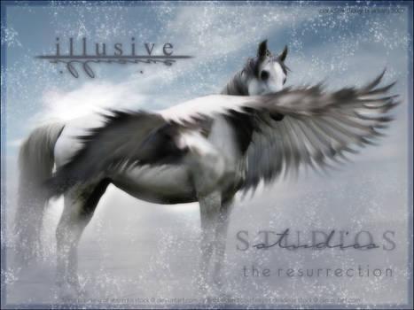 Illusive Pegasus