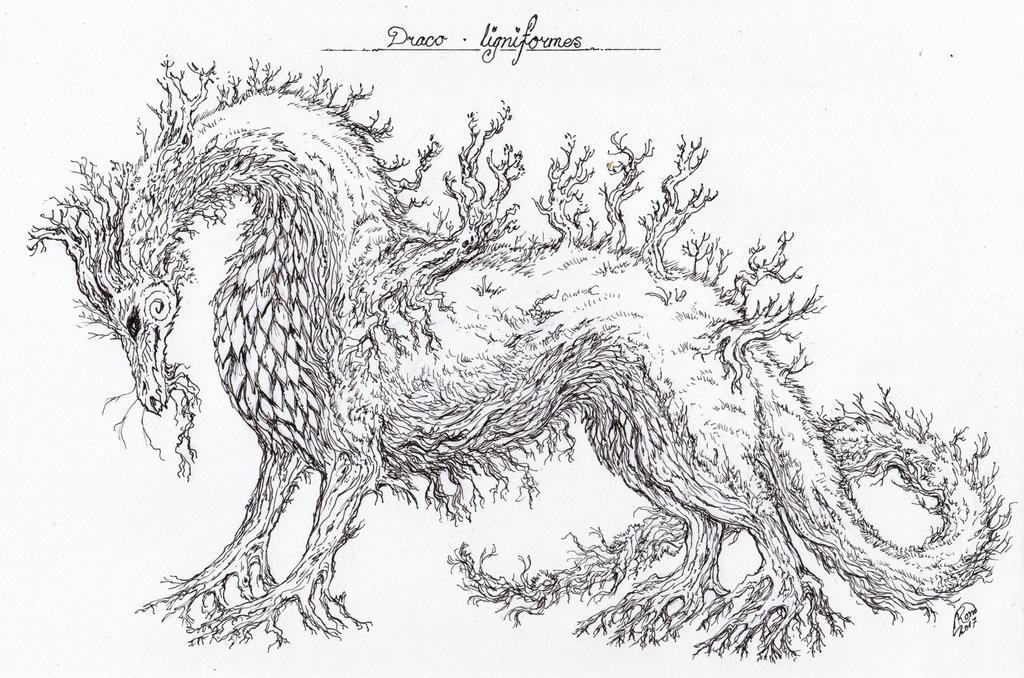 Draco ligniformes by Kaytara