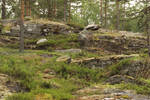 Rocky Forest
