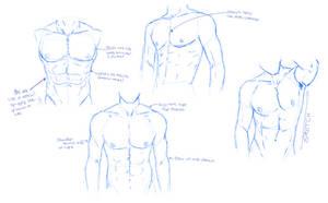 Man Chest Sketches by itsmyartfam