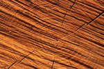 wood texture sawn wood pine trunk