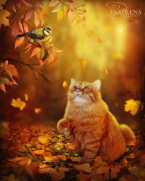 Autumn cat by Vladlena111