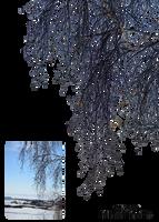 birch branches by Vladlena111