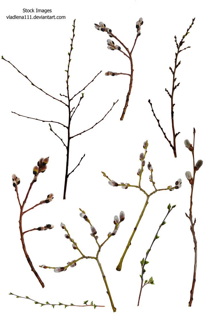 Branch spring tree PNG by Vladlena111