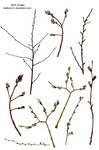 Branch spring tree PNG