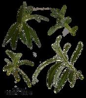 Branch spring tree PNG 2 by Vladlena111