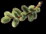 Branch spring  PNG -4