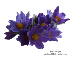 Spring flowers PNG 1