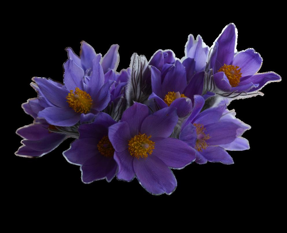 Spring Flowers Png 1 By Vladlena111 On Deviantart