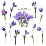 Spring flowers PNG  2