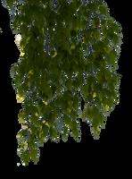 birch branches 6 by Vladlena111