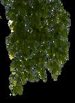 birch branches 6