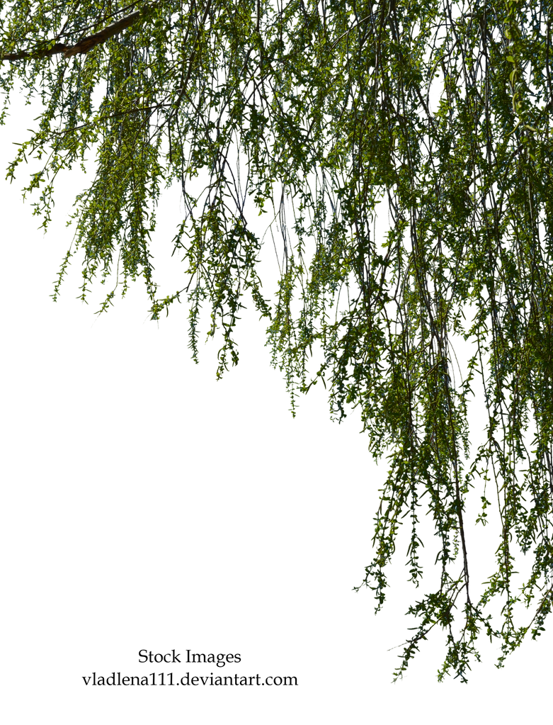 Willow branches 2 by Vladlena111