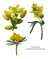 Spring flowers PNG 3 by Vladlena111