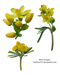 Spring flowers PNG 3