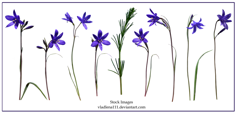 Spring flowers PNG 4