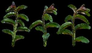 Plants by Vladlena111
