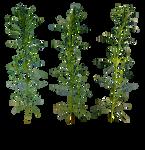 Plants - 2