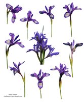 Spring flowers PNG 5 by Vladlena111
