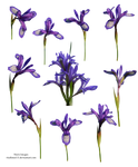 Spring flowers PNG 5