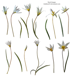 Spring flowers PNG 6 by Vladlena111