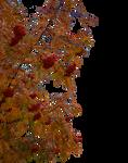 Autumn Rowan branches