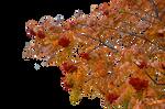 Autumn Rowan branches-2
