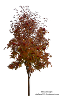 Autumn tree 2 by Vladlena111