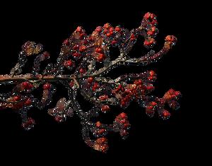 Autumn branches 5
