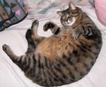 Skunk is a fat cat.