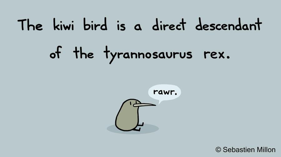 Kiwi T-rex by sebreg