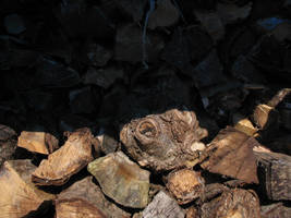 Wood 2 by DaLoonie