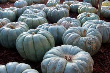 Pumpkin Patch 2 by Luscara-Nature-Stock