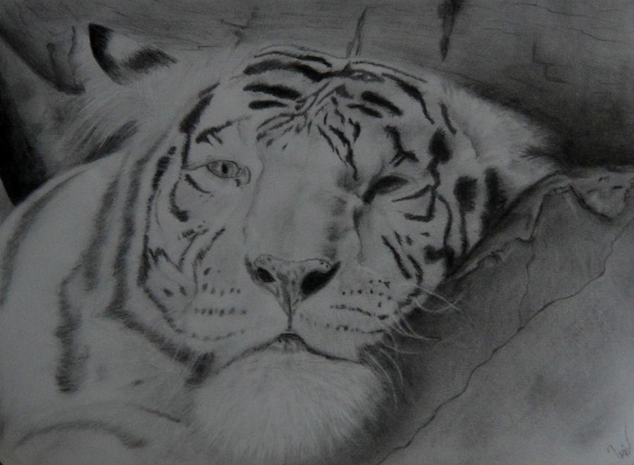 Tiger by Uziel-art13