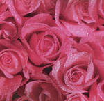 Rough Rose Texture