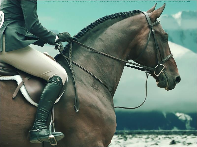 Hunter-Jumper Horse by DutchGlow