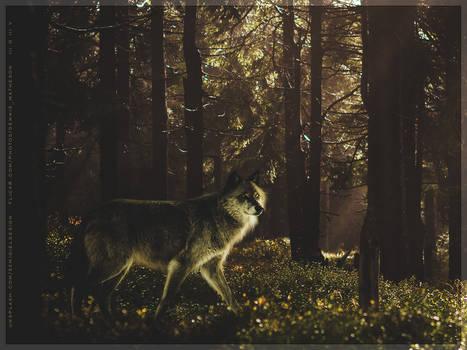 { - - - - kaleiya / iberian wolf