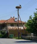 Stork on Nest, Kastoria by bobswin