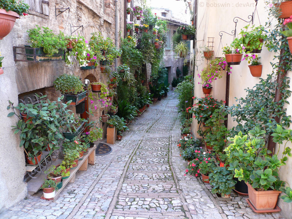 Spello - Flowers without Gardens