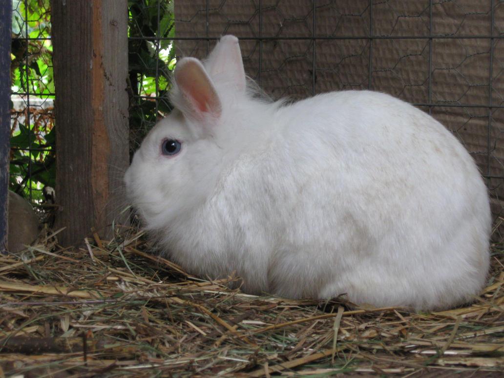 blue rabbit dating Cassandra cass, 37, who lives in san  transgender star cassandra cass spent $200,000 to look like jessica rabbit  chloe grace moretz looks stylish in a sky blue.