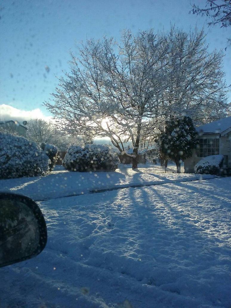 Snow covered yard by TrappedInMyDaydreams